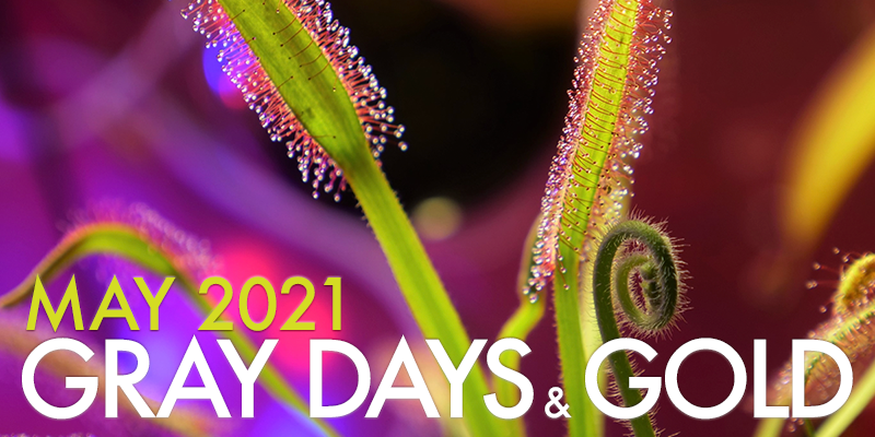 Gray Days and Gold May 2021